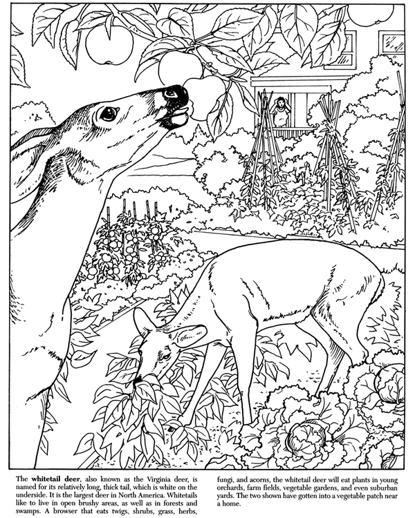 free dover coloring pages - photo#31