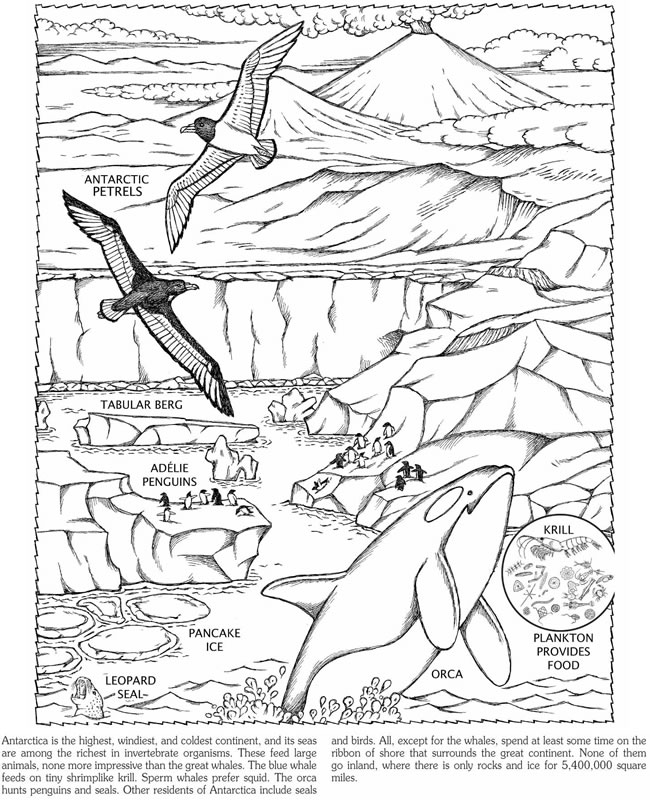 Free Coloring Pages Of South Pole The Pole Coloring Pages