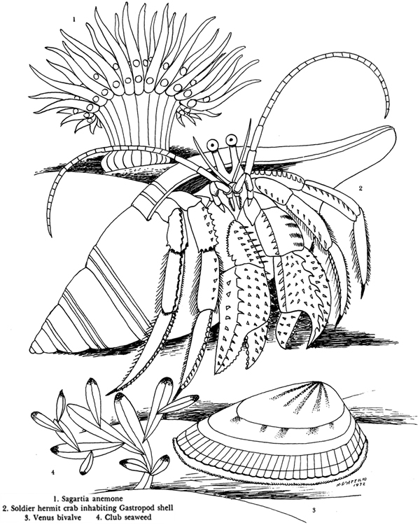 dover publications coloring pages decimamas