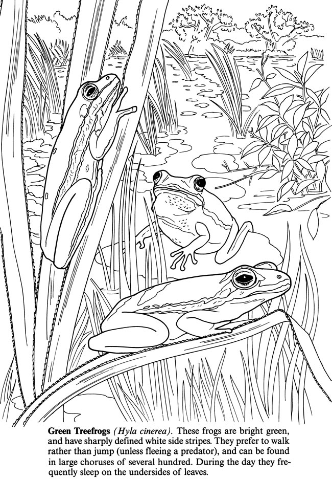 Free Coloring Pages Pond Animals : Welcome to dover publications