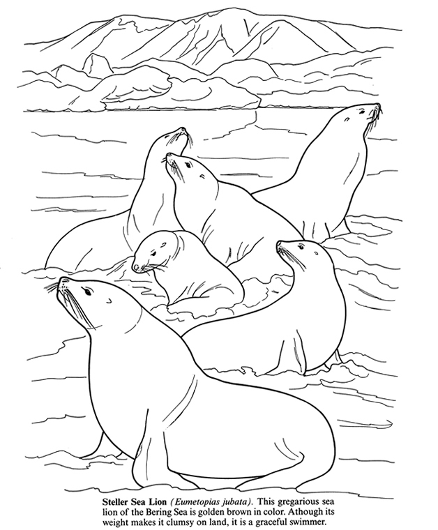 Arctic coloring sheets coloring pages for Antarctic animals coloring pages