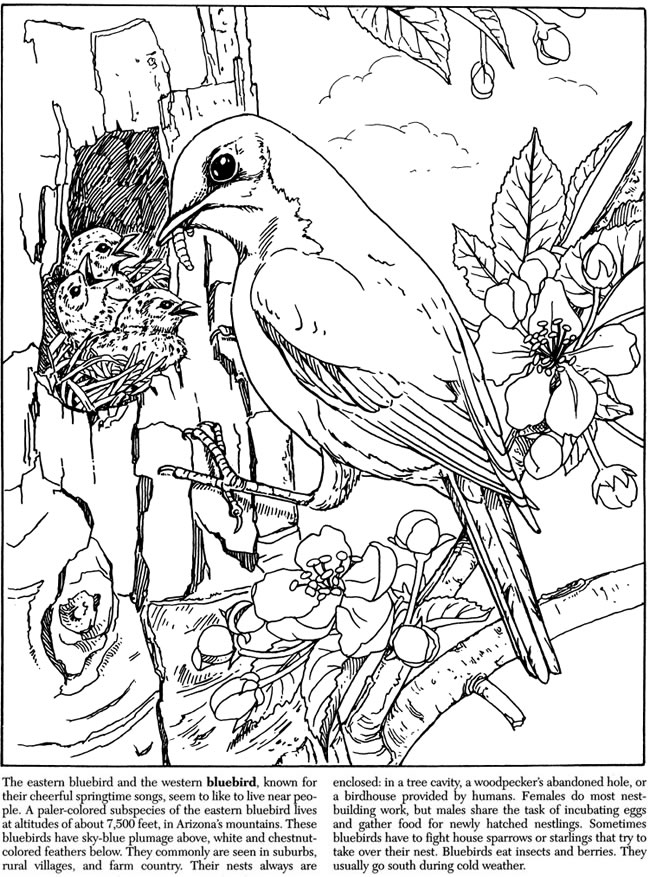 free dover coloring pages - photo#30