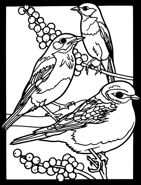 Welcome to dover publications for Eastern bluebird coloring page