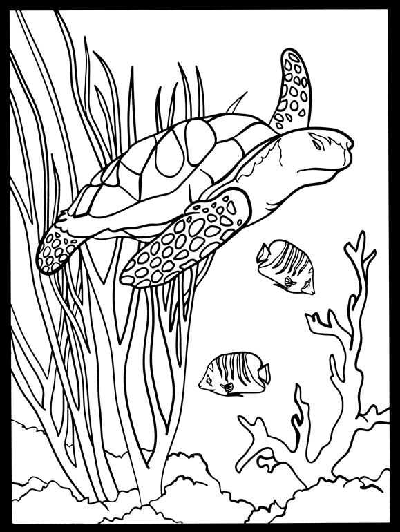 Adult Coloring Page Sea Coral