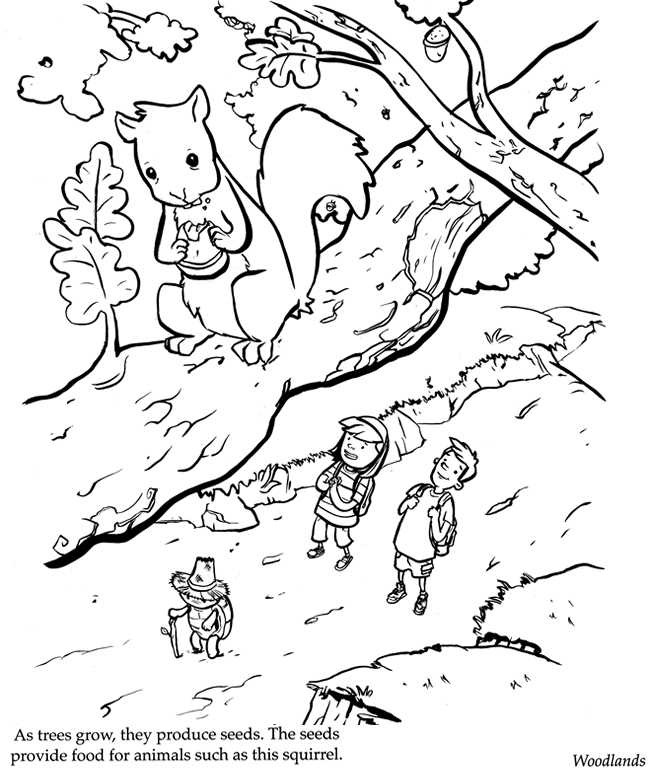 Free Coloring Pages Of Rainforest Ecosystem Ecosystem Coloring Pages