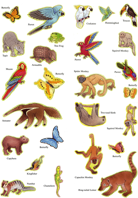 List of Tropical Forest Animals  Animal Website For Kids