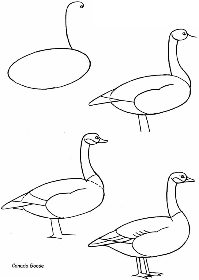 Canada goose pictures you can draw for A website where you can draw