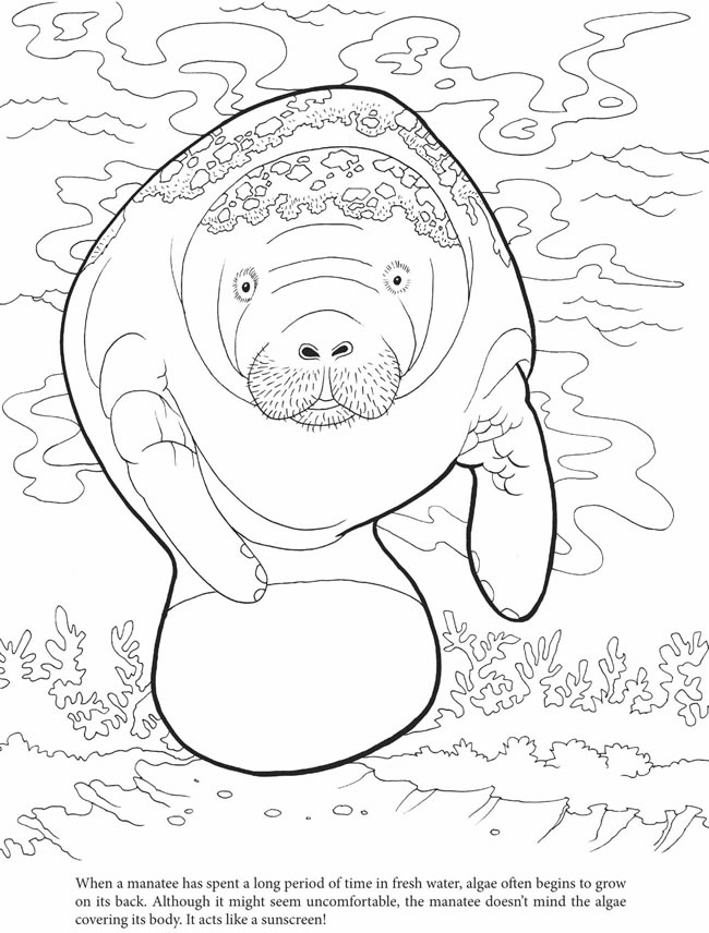 manatee free coloring pages - photo#9
