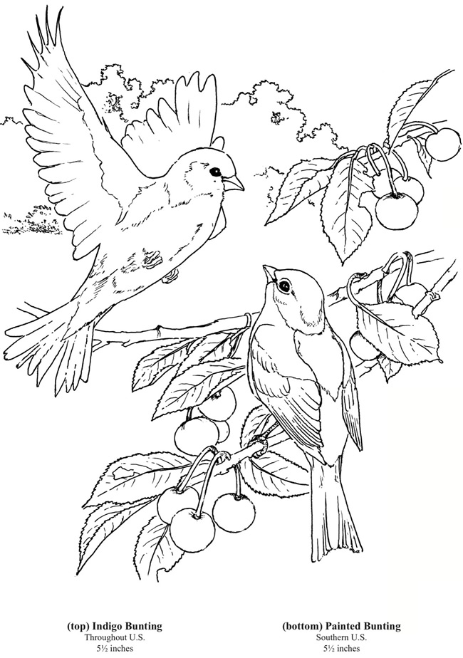 Chinese Bird Coloring Pages