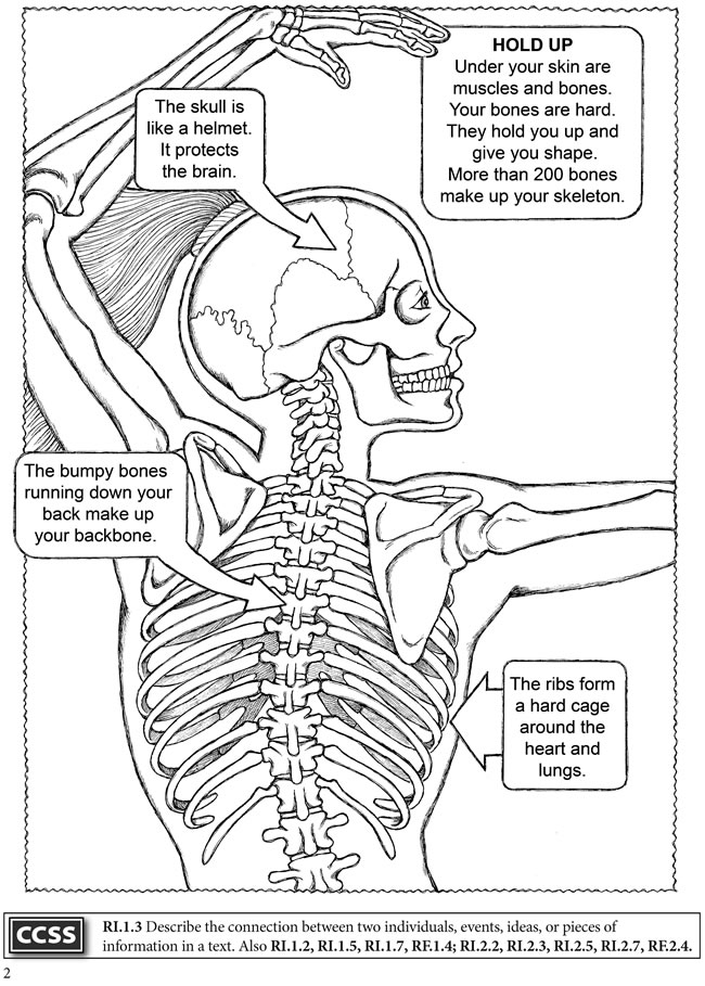 my coloring pages human body - photo#18