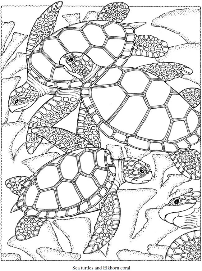 Generous Best Coloring Books For Adults Tiny Blue Is The Warmest Color Book Regular Giant Coloring Books Coloring Book App Old Gangsta Rap Coloring Book BrightBible Coloring Book Welcome To Dover Publications