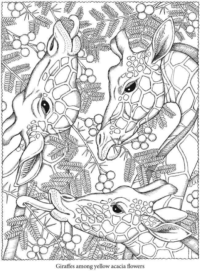 free printable nature coloring pages for adults - welcome to dover publications