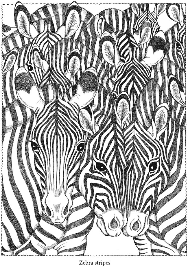 Welcome to dover publications Coloring book zebra