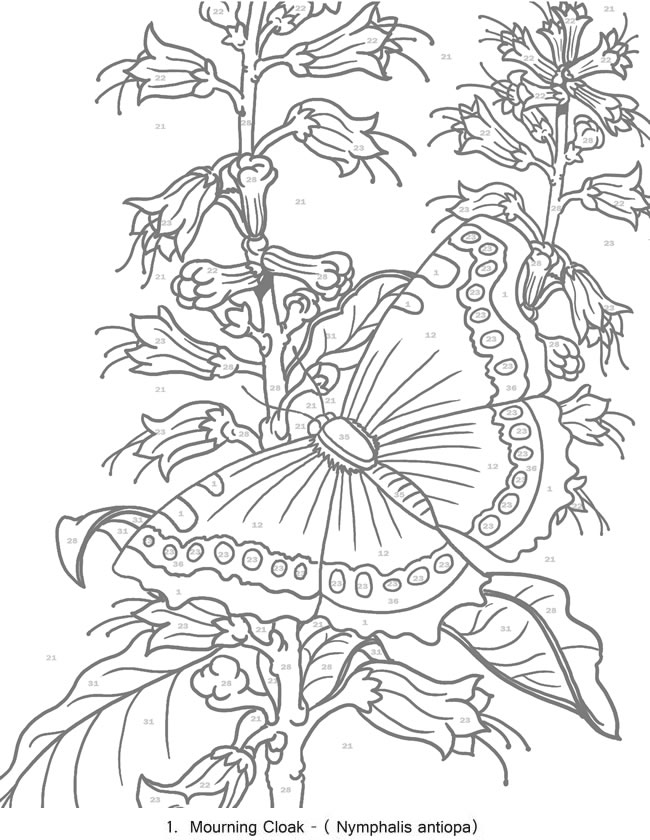 Coloring Pages Gtgt By Number On Pinterest