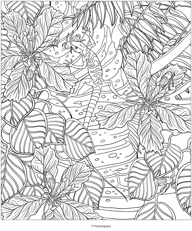 Hidden Animals Coloring Pages : Welcome to dover publications