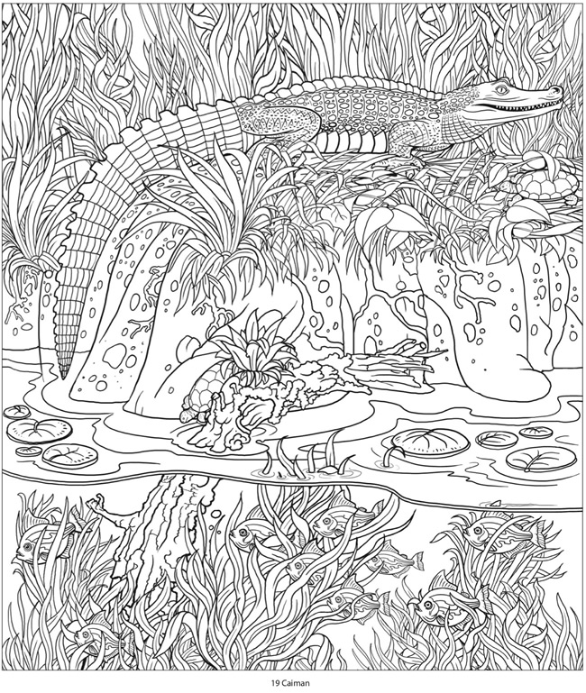 Welcome to dover publications Coloring book amazon