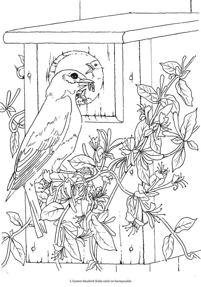 Color By Number Coloring Pages Roses Color Best Free Coloring Pages