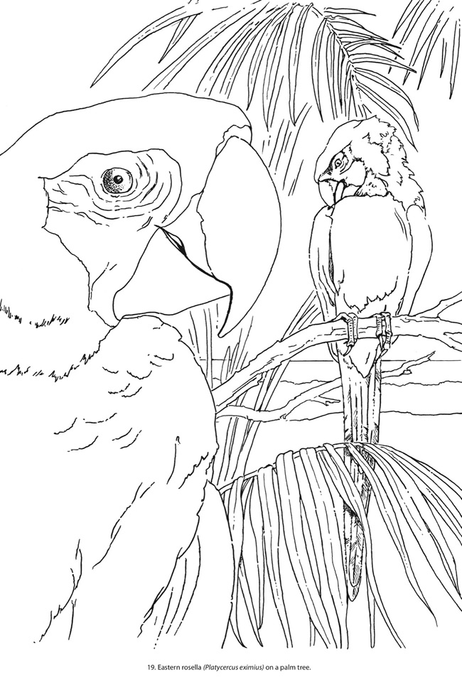 Creative Haven Coloring Sheets Colored Coloring Pages