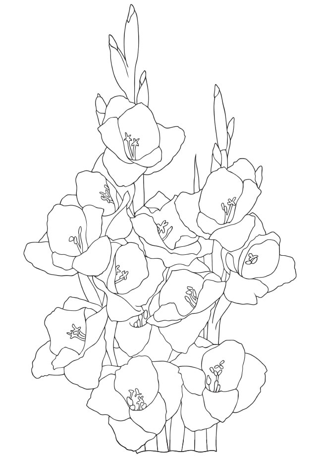 Gladiolus Coloring Pages Download And Print Sketch